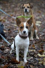 Gimbi,Staufen,Kaisertempel, T-Dogs, 12.10.2014, Foto Nr.5