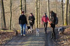 Schmitten zur Landsteiner Mühle,T-Dogs, 11.1.2014,Foto Nr.20