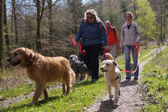 Taunushöhen,T-Dogs,18.4.2015 Foto Nr.5