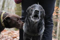 Hofheimer Kapellenberg,T-Dogs,15.12.2013, Foto Nr.6