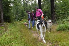 Drachenwege 2,T-Dogs,31.8.2014, Foto Nr.7