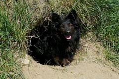 Bensheimer Weinlagen, T-Dogs, 5.5.13, Foto Nr.9