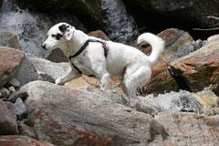 Schweiz-Tessin,T-Dogs,Mai 2014 Foto Nr.24