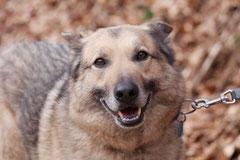 Lindenfels, T-Dogs, 7.3.2015 Foto Nr.9