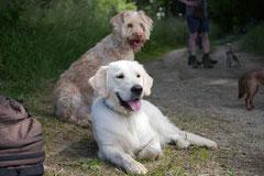 Lindenfels mit Picnic,T-Dogs,15.6.2014,Foto Nr.30