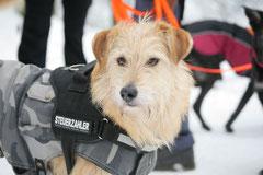 Altkönig,T-Dogs,01.2.2014, Foto Nr.15