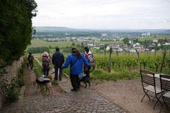 Himmelssteig+Mühlenweg,T-Dogs,10.5.14,Foto Nr.20