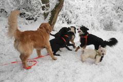 Nele Neuhaus Krimi Tour, T-Dogs, 1.2.2015 Foto Nr.19