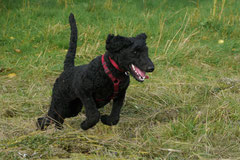 Hundeschulausflug-Sicher auf 4 Pfoten-28.9.13 Foto Nr.10