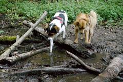 Bensheimer Weinlagen, T-Dogs, 5.5.13, Foto Nr.14