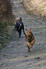 Rod an der Weil, T-Dogs,12.1.14, Foto Nr.9