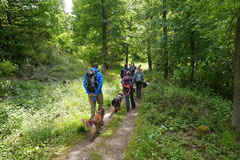 Rheinsteig Light, T-Dogs, Mai 2014, Foto Nr.7