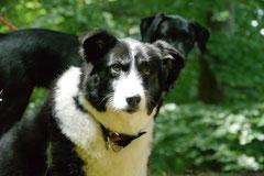 Rund um den Zacken, Trekking-Dogs,30.6.13, Foto Nr.19
