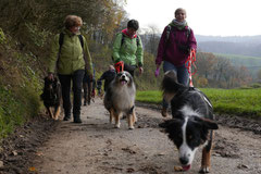 Bensheimer Weinlagen,T-Dogs,22.11.2014, Foto Nr.2