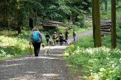 Rund um den Zacken, Trekking-Dogs,30.6.13, Foto Nr.22