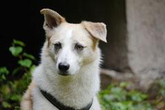 Drachenwege 2,T-Dogs,31.8.2014, Foto Nr.14