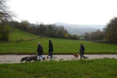 Bensheimer Weinlagen,T-Dogs,22.11.2014, Foto Nr.5
