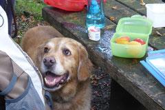 Taunushöhen,T-Dogs, 7.9.2014, Foto Nr.6