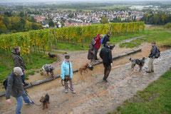 Bensheimer Weinlagen,T-Dogs,20.10.13, Foto Nr.15