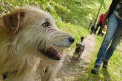 Rund um Lindenfels, T-Dogs,12.4.2014, Foto Nr.22