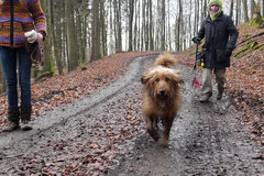 Schnuppertour Zacken,T-Dogs,17.1.2015, Foto Nr.10