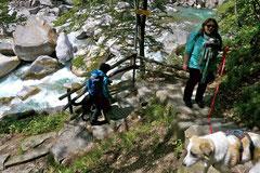 Schweiz-Tessin T-Dogs,Mai 2013, Foto Nr.10