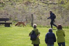 Mantrailing+Wandern Rhön,T-Dogs,30.4.-3.5.2015 Foto Nr.29