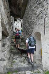 Schweiz-Tessin,T-Dogs,Mai 2014 Foto Nr.44