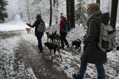 Nele Neuhaus Krimi Tour, T-Dogs, 1.2.2015 Foto Nr.21