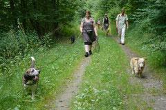 Wispersee, T-Dogs,28.07.2013, Bild Nr.6
