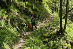 Schweiz-Tessin,T-Dogs,Mai 2014 Foto Nr.19