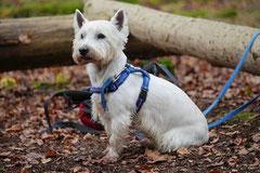 Rhön,Wellness+Wandern,T-Dogs,7.-9.11.2014, Foto Nr.4