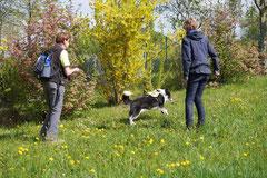 Mantrailing+Wandern Rhön,T-Dogs,30.4.-3.5.2015 Foto Nr.18
