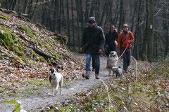 Gimbi,Staufen,Kaisertempel,T-Dogs,2.2.2014, Foto Nr.16