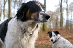 Schmitten zur Landsteiner Mühle,T-Dogs, 11.1.2014,Foto Nr.13