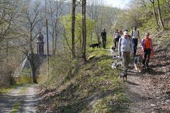 Rheingauen Gebück,T-Dogs,29.+30.3.14, Foto Nr.1