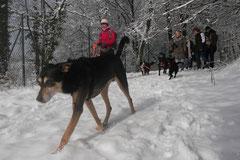 Nele Neuhaus Krimi Tour, T-Dogs, 1.2.2015 Foto Nr.13