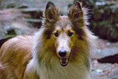 Rund um den Zacken, Trekking-Dogs,30.6.13, Foto Nr.14
