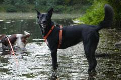 Hundeschulausflug Sicher auf 4 Pfoten, Grüner See, 28.9.14, Foto Nr.17