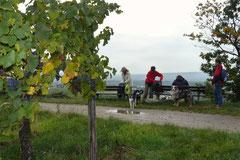 Klosterrunde,T-Dogs,06.10.2013, Foto Nr.10