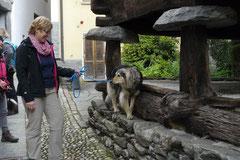 Schweiz-Tessin T-Dogs,Mai 2013, Foto Nr.23
