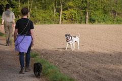 Hundeschulausflug Sicher auf 4 Pfoten, Grüner See, 28.9.14, Foto Nr.13