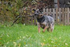 Rhön,Wellness+Wandern,T-Dogs,7.-9.11.2014, Foto Nr.6