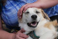 Lindenfels mit Picnic,T-Dogs,15.6.2014,Foto Nr.29