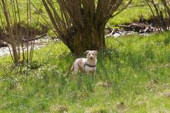 Taunushöhen,T-Dogs,18.4.2015 Foto Nr.10