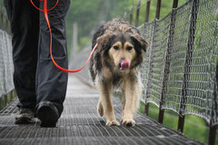Schweiz-Tessin,T-Dogs,Mai 2014 Foto Nr.8