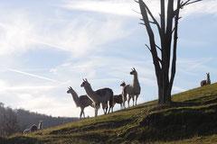 Schmitten zur Landsteiner Mühle,T-Dogs, 11.1.2014,Foto Nr.16