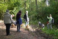 Grünwiesenweiher Welttierschutztag, T-Dogs, 4.10.2014 Foto Nr.14