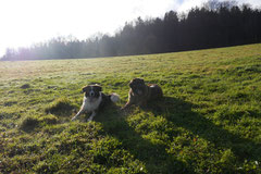 Weiltal, T-Dogs, 7.12.2014, Foto Nr.14
