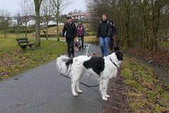 Schmitten zur Landsteiner Mühle,T-Dogs, 11.1.2014,Foto Nr.1